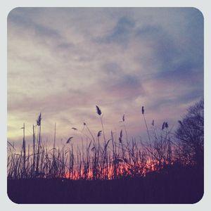 Reeds @ sunset