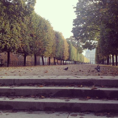 Tuileries garden steps