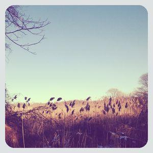 Marsh in setauket