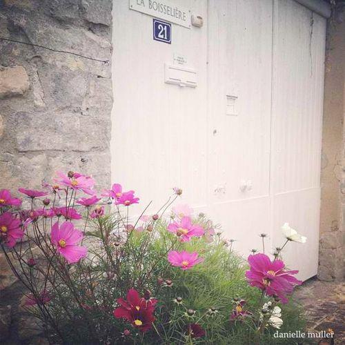 Pink Flowers in Bourron Marlotte