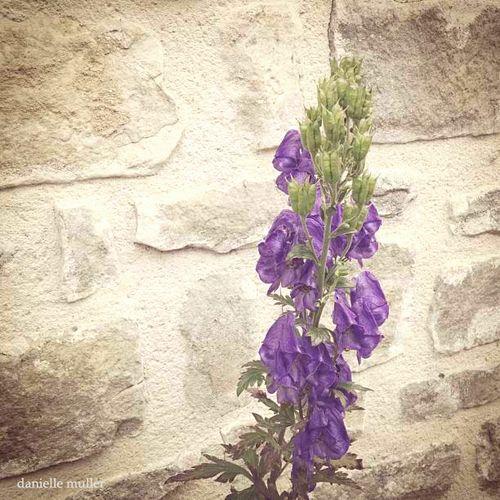 Purple Flowers in Bourron Marlotte