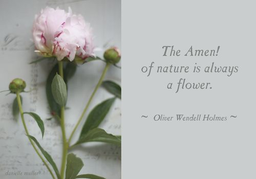 The-Amen-of-Nature