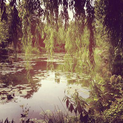 Monet's garden 8