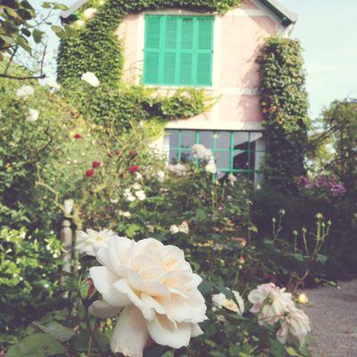 Monet's garden 14