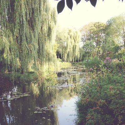 Monet's garden 26