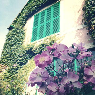 Monet's garden 25