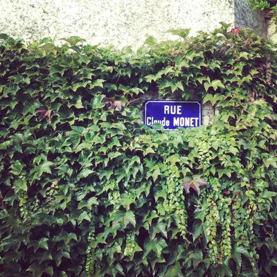 Monet's garden 9