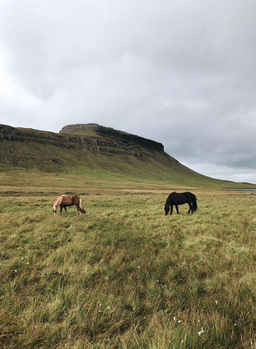 Iceland 66
