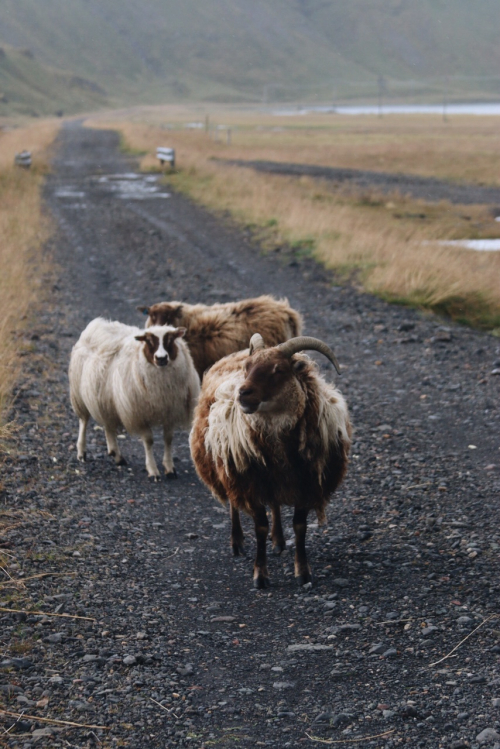 Iceland 43